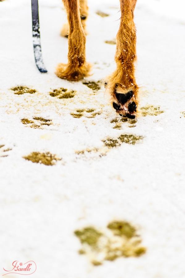 hundespaziergang_web_09